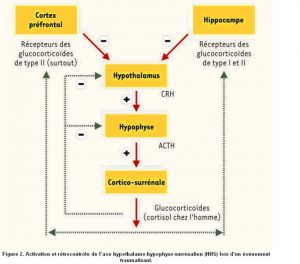 Physiologie du stress - Labrha